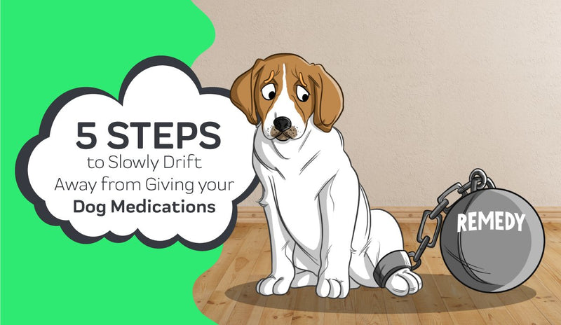 5 Steps to Slowly Drift Away from Giving Your Dog Medications