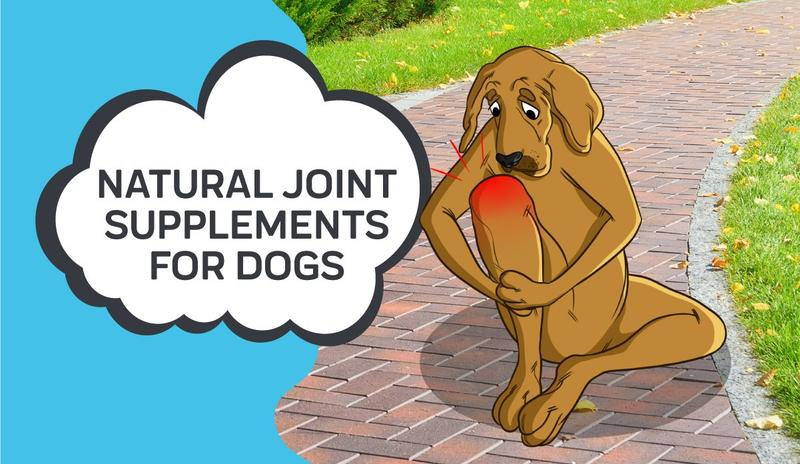 Natural Joint Supplements For Dogs
