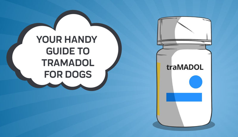 Your Handy Guide To Tramadol For Dogs