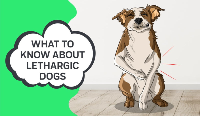 What to Know About Lethargic Dogs