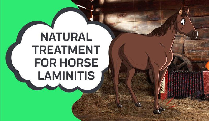 Natural Treatment For Horse Laminitis