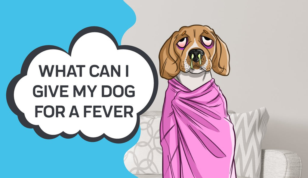 What Can I Give My Dog for a Fever?