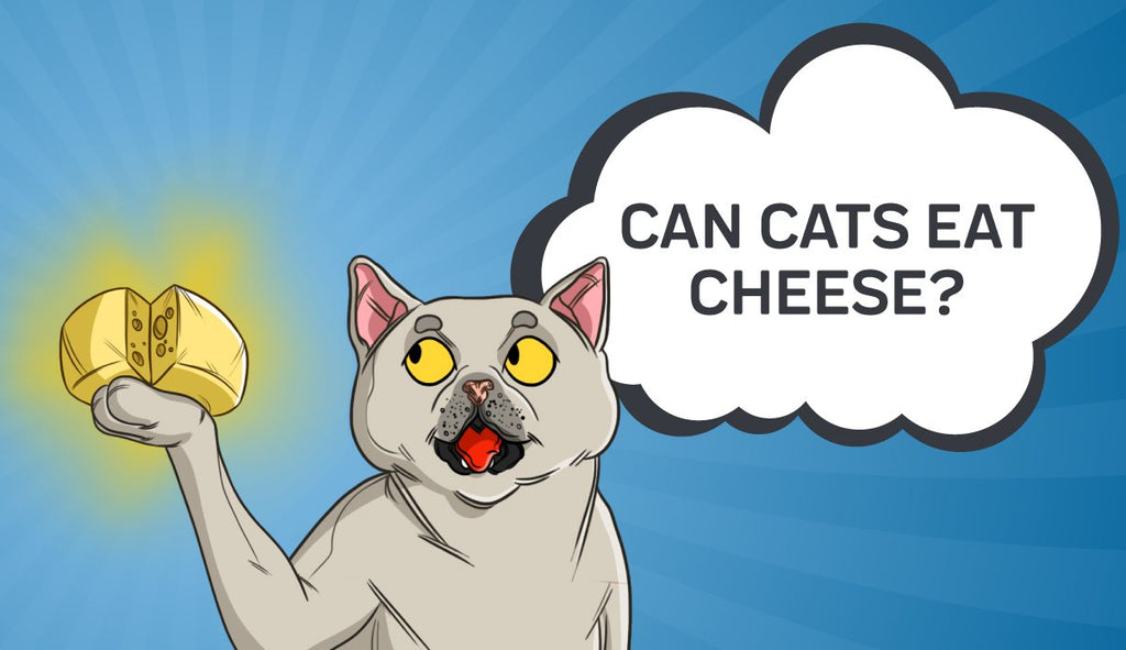 Can Cats Eat Cheese? Is There Cause for Concern?