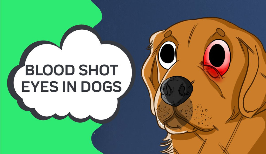 Blood Shot Eyes in Dogs