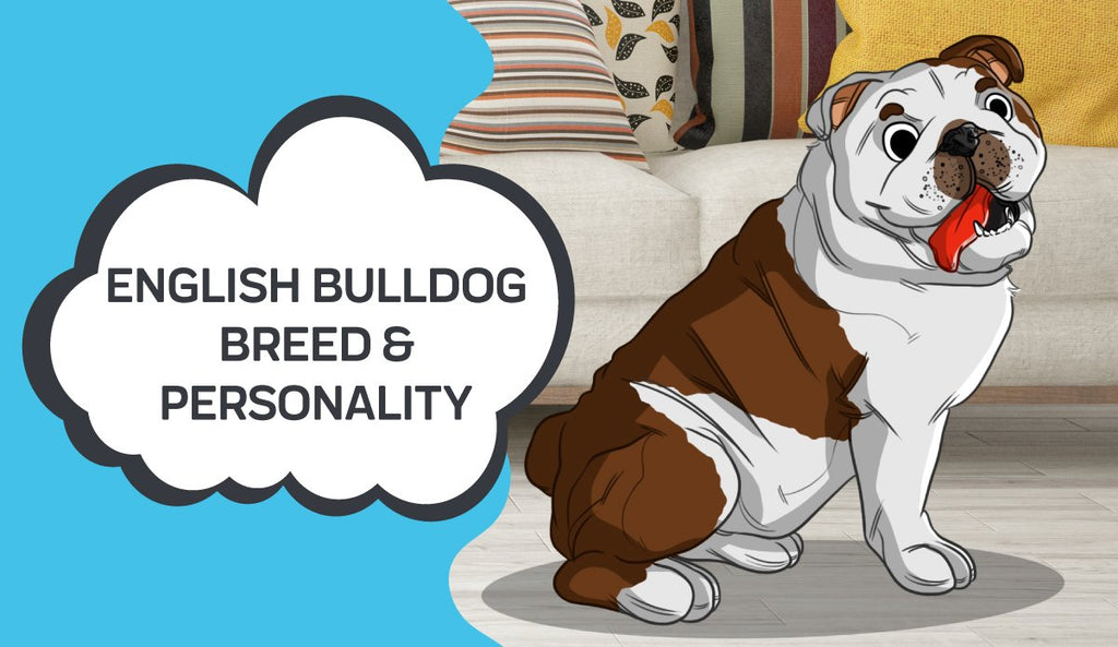 Learn About the English Bulldog Breed & Personality