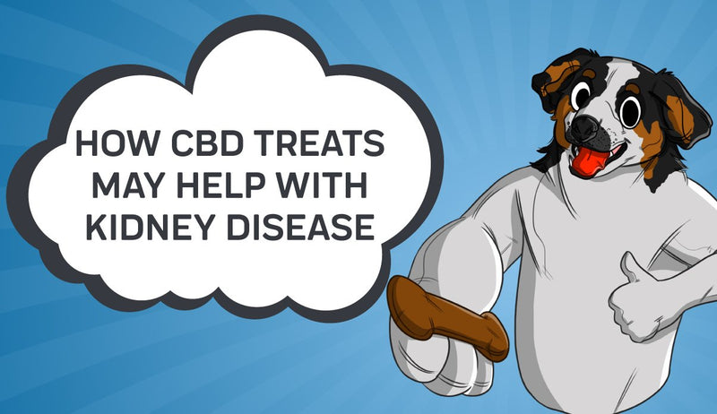 How CBD Treats may Help with Kidney Disease