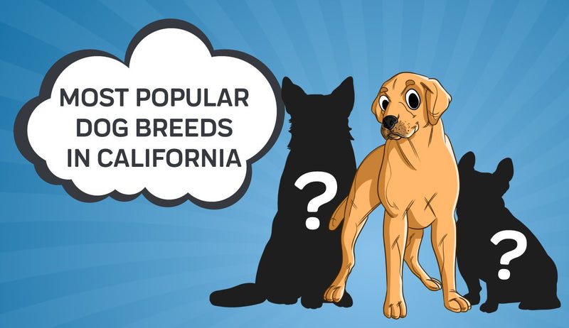 Most Popular Dog Breeds in California