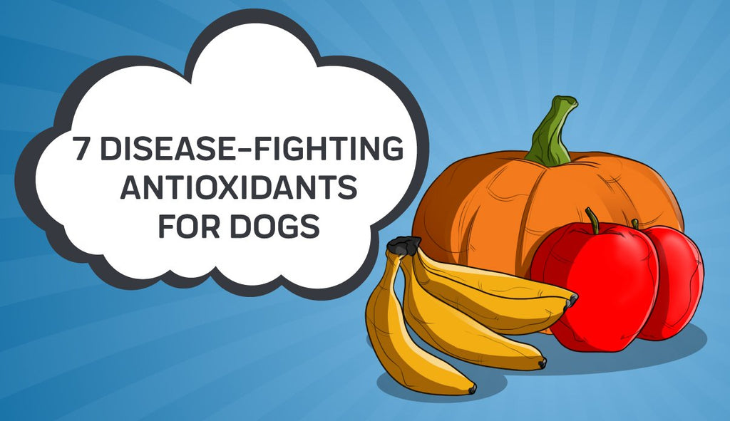 7 Disease-Fighting Antioxidants For Dogs