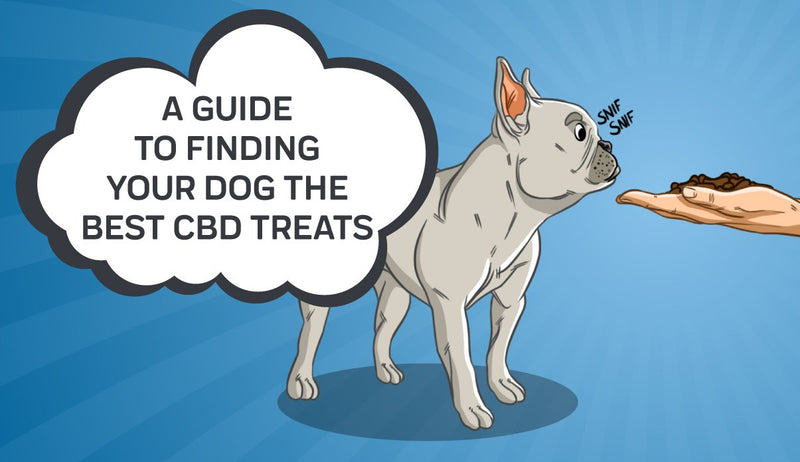 A Guide To Finding Your Dog the Best CBD Treats