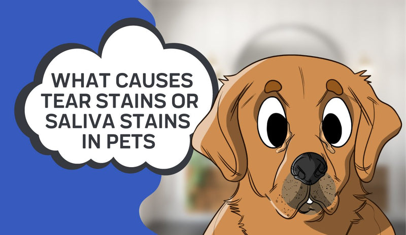What Causes Tear Stains or Saliva Stains in Pets
