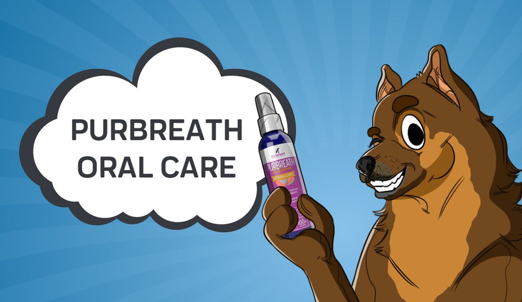 PurBreath Oral Care - Why Your Dog Needs It