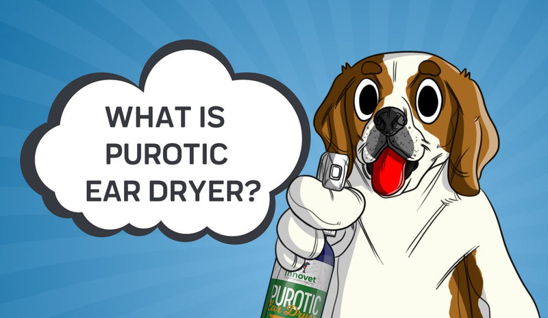What Is PurOtic Ear Dryer?