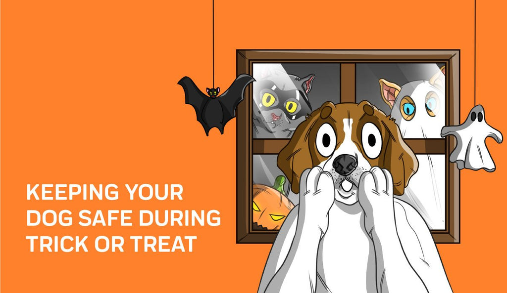 To Prep for Halloween, Innovet Pet Shares What Pet Owners Should Do If Their Dog Eats Chocolate