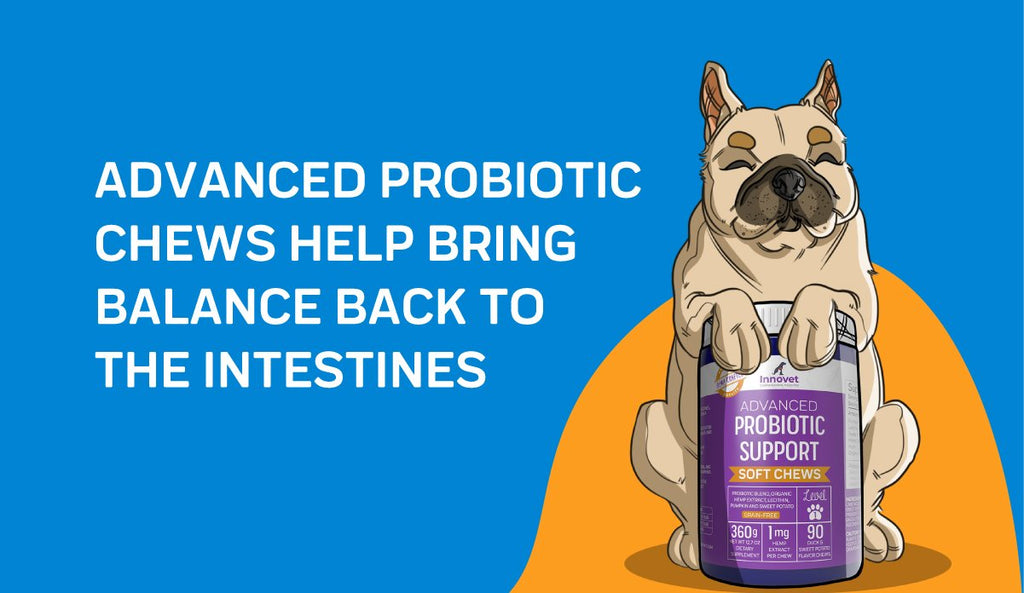 Why We Created Our Advanced Probiotic Chews