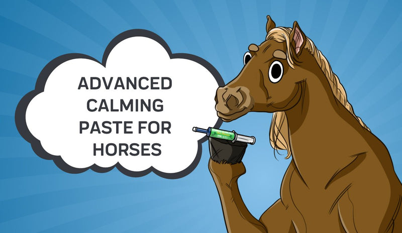 Advanced Calming Paste for Horses