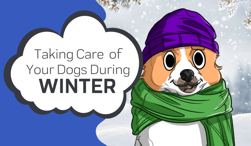 Taking Care Of Your Dog During The Winter