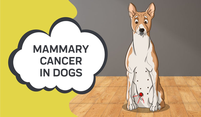 Mammary Cancer in Dogs