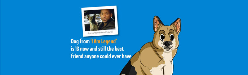 Will Smith's Dog, Abbey, From 'I Am Legend' Is 13 And Still Happy And Healthy