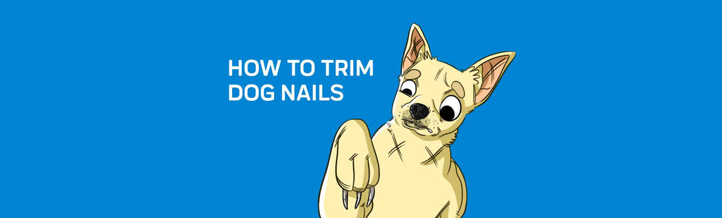 How to Trim Dog Nails: 5 Tips For Stress-Free Nail Trimming
