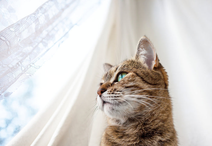 Is Your New Cat Stressed Out? Hemp Oil May Help