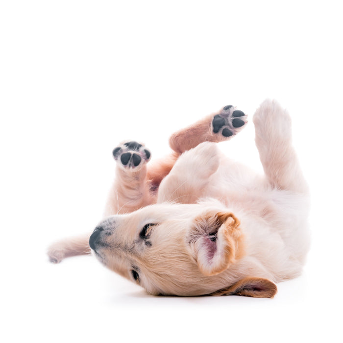 6 Things That Are Causing Your Dog to Constantly Scratch Itself