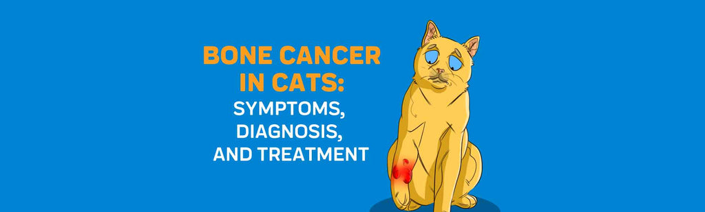 Bone Cancer in Cats: Symptoms, Diagnosis, and Treatment