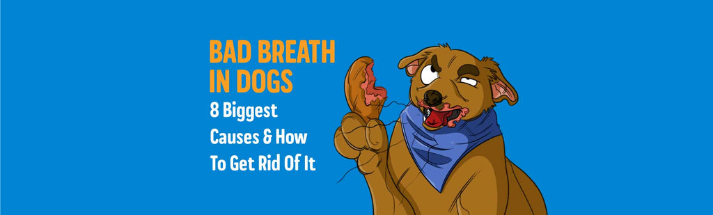 Bad Breath in Dogs: 8 Biggest Causes & The Remedies To Get Rid Of It