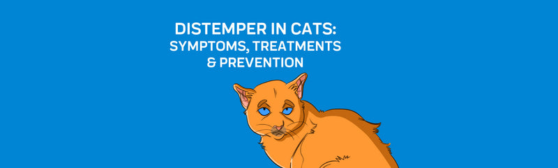 Distemper in Cats: Symptoms, Treatments & Prevention