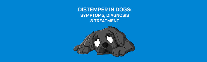 Distemper in Dogs: Symptoms, Diagnosis & Treatment