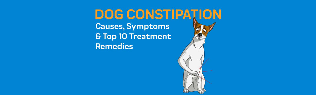 Dog Constipation: Causes, Symptoms & Top 10 Treatment Remedies