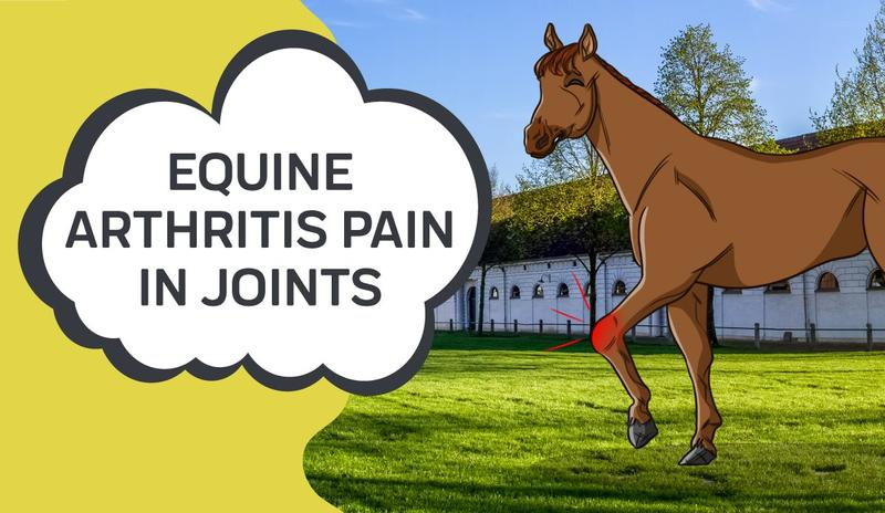 Equine Arthritis Pain in Joints
