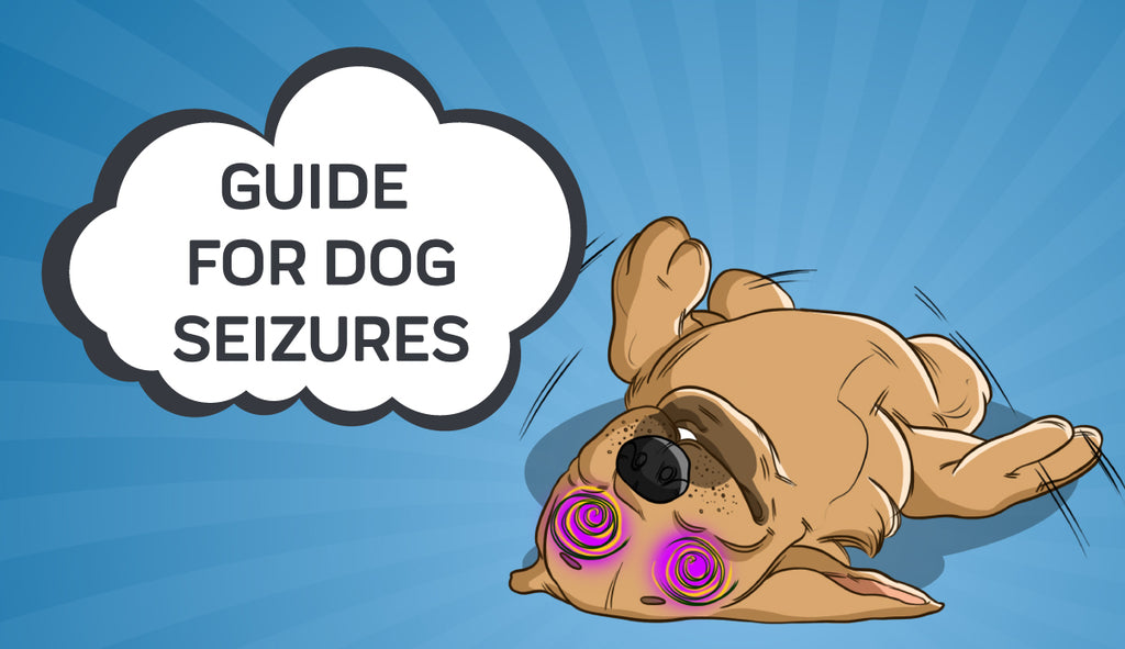 Seizures & Epilepsy in Dogs: What to Look Out for and How to Help