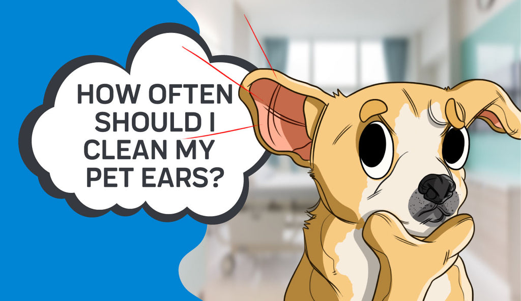 How Often Should I Clean My Pets Ears?