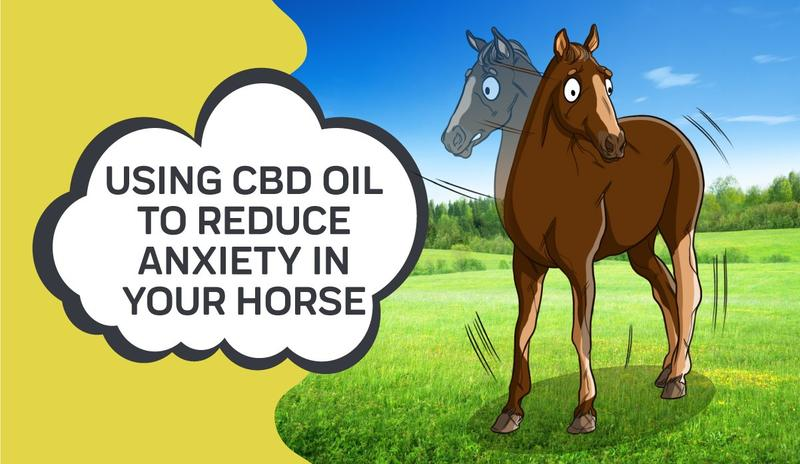 How CBD Oil Can Reduce Horse Anxiety