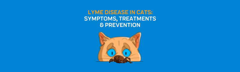Lyme Disease in Cats: Symptoms, Treatments & Prevention