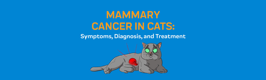 Mammary Cancer in Cats: Symptoms, Diagnosis, and Treatment