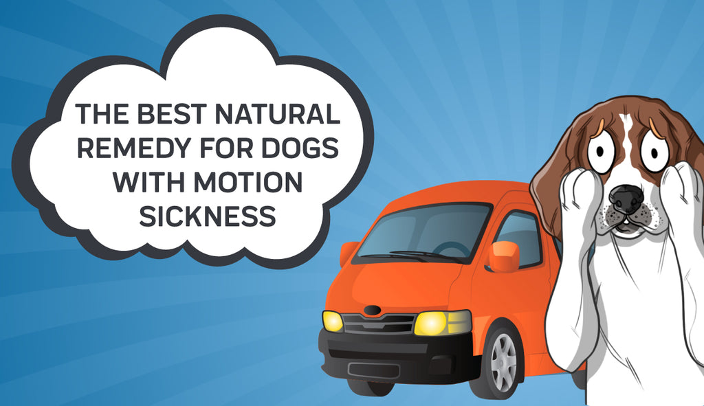 The Best Natural Remedy For Dogs With Motion Sickness