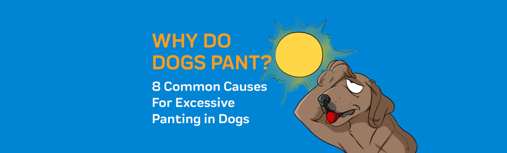 Why Do Dogs Pant? 8 Common Causes For Excessive Panting in Dogs