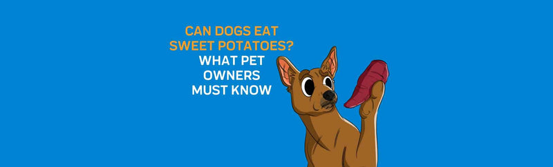 Can Dogs Eat Sweet Potatoes? What Pet Owners Must Know