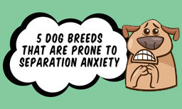 5 Dog Breeds That Are Prone to Separation Anxiety