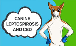 canine leptospirosis and how cbd oil may help