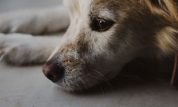 Dog Separation Anxiety: Using CBD To Calm Your Dog
