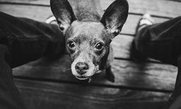 Understanding the Effects of Separation Anxiety on Dogs