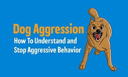 Dog Aggression: How To Understand & Stop Aggression in Dogs