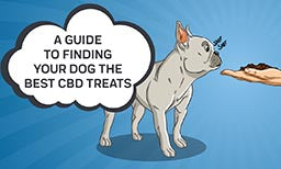 finding your dog the best cbd treats