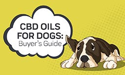 cbd oil for dogs buyers guide