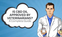 Is CBD Oil Approved by Veterinarians? A Complete Guide