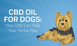 how you can help your yorkie poo with cbd