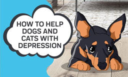 How to Help Dogs and Cats with Depression