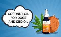 coconut oil and cbd for dogs
